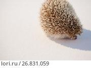 Close-up of porcupine. Стоковое фото, агентство Wavebreak Media / Фотобанк Лори