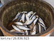 Купить «Herring in a wooden barrel - sea fish», фото № 26836923, снято 15 февраля 2017 г. (c) Константин Шишкин / Фотобанк Лори
