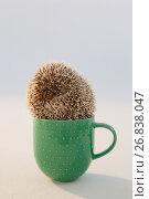 Купить «Close-up of porcupine in mug», фото № 26838047, снято 11 апреля 2017 г. (c) Wavebreak Media / Фотобанк Лори
