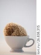 Купить «Close-up of porcupine in cup», фото № 26838315, снято 11 апреля 2017 г. (c) Wavebreak Media / Фотобанк Лори