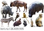 Купить «Collage with African mammals and birds», фото № 26839935, снято 18 ноября 2018 г. (c) Яков Филимонов / Фотобанк Лори