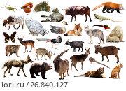 Купить «asia animals isolated», фото № 26840127, снято 13 декабря 2018 г. (c) Яков Филимонов / Фотобанк Лори