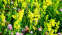 Various herbs and flowers on meadow close-up, Russia, видеоролик № 26844687, снято 29 июня 2017 г. (c) Володина Ольга / Фотобанк Лори