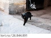 Купить «A black cat just crossed your path», фото № 26844891, снято 26 сентября 2014 г. (c) Ольга Визави / Фотобанк Лори