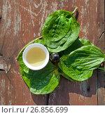 Купить «Травяной отвар и настойка из листьев и семян подорожника», фото № 26856699, снято 13 июля 2017 г. (c) Татьяна Белова / Фотобанк Лори