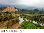 Купить «Рисовые террасы», фото № 26867707, снято 29 июля 2012 г. (c) Морозова Татьяна / Фотобанк Лори