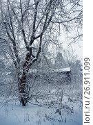 Winter nature, alley in park. Стоковое фото, фотограф ElenArt / Фотобанк Лори