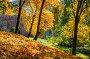 Золотые ветви Gold of autumn trees, фото № 26950211, снято 1 октября 2016 г. (c) Baturina Yuliya / Фотобанк Лори