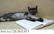Купить «Gray kitten lies on an open book», видеоролик № 26953911, снято 28 июля 2017 г. (c) Володина Ольга / Фотобанк Лори