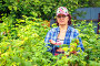 Женщина собирает малину, фото № 26955187, снято 21 июля 2017 г. (c) Акиньшин Владимир / Фотобанк Лори