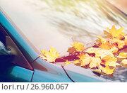 Купить «close up of car wiper with autumn leaves», фото № 26960067, снято 12 октября 2016 г. (c) Syda Productions / Фотобанк Лори