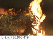 Купить «Костер на празднике Ивана Купала», фото № 26965419, снято 15 июля 2017 г. (c) Марина Володько / Фотобанк Лори