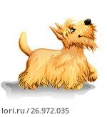 Купить «Милый щенок скотч-терьер (Шотландский терьер) бежевого (палевого) окраса стоит, подняв лапу, и смотрит вверх. Желтая собака, символ 2018 года по китайскому календарю. Иллюстрация в мультипликационном стиле», иллюстрация № 26972035 (c) Анастасия Некрасова / Фотобанк Лори