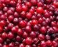 Свежие ягоды клюквы, фото № 26979399, снято 18 июня 2017 г. (c) Вячеслав Палес / Фотобанк Лори