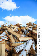 Купить «Chopped birch firewood for heating in winter», фото № 26980523, снято 28 августа 2017 г. (c) Иван Карпов / Фотобанк Лори