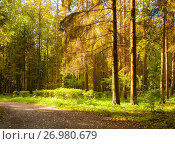 Купить «Autumn forest landscape with trees in the forest in sunny autumn weather», фото № 26980679, снято 21 сентября 2017 г. (c) Зезелина Марина / Фотобанк Лори