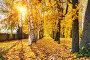 Sunny autumn in the park, фото № 26981871, снято 4 октября 2016 г. (c) Sergey Borisov / Фотобанк Лори