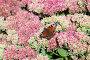 Butterfly on flowers, фото № 26983215, снято 24 сентября 2017 г. (c) Argument / Фотобанк Лори