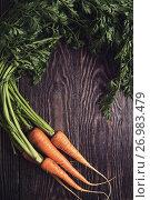 Купить «Freshly grown carrots», фото № 26983479, снято 17 июля 2016 г. (c) Jan Jack Russo Media / Фотобанк Лори