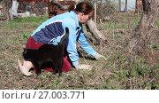Купить «Женщина работает на даче. Женщина рвет сорную траву», видеоролик № 27003771, снято 4 апреля 2017 г. (c) Олег Хархан / Фотобанк Лори
