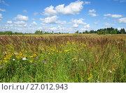 Купить «Летний пейзаж с полевыми цветами на лугу в солнечный день», эксклюзивное фото № 27012943, снято 15 августа 2017 г. (c) Елена Коромыслова / Фотобанк Лори
