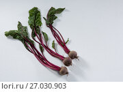 Купить «Beetroots on a white background», фото № 27030903, снято 12 июня 2017 г. (c) Wavebreak Media / Фотобанк Лори
