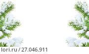 Купить «Сосновые ветки в снегу на белом фоне», фото № 27046911, снято 4 октября 2017 г. (c) Икан Леонид / Фотобанк Лори