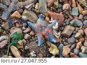 Купить «Морская звезда», фото № 27047955, снято 17 сентября 2017 г. (c) Овчинникова Ирина / Фотобанк Лори