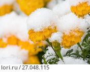 Купить «Заснеженные цветы», фото № 27048115, снято 30 сентября 2017 г. (c) Икан Леонид / Фотобанк Лори