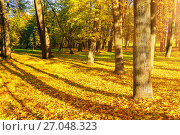 Купить «Autumn picturesque landscape. Desiduous autumn tree with fallen autumn leaves lit by sunshine», фото № 27048323, снято 9 октября 2016 г. (c) Зезелина Марина / Фотобанк Лори