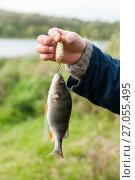 Купить «Рыбак держит в руке пойманного на блесну окуня», эксклюзивное фото № 27055495, снято 4 октября 2017 г. (c) Игорь Низов / Фотобанк Лори
