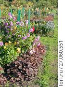 Купить «Ухоженная плантация георгин и других осенних цветов», эксклюзивное фото № 27060551, снято 8 октября 2017 г. (c) Svet / Фотобанк Лори