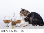 Купить «Black-and-white Persian cat, bottle cognac and two glass filled with a dry feed for cats», фото № 27067135, снято 8 октября 2017 г. (c) Anatoly Timofeev / Фотобанк Лори