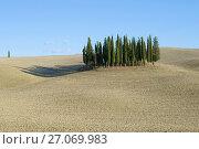 Купить «Кипарисы  посреди вспаханного поля. Тоскана, Италия», фото № 27069983, снято 20 сентября 2017 г. (c) Виктор Карасев / Фотобанк Лори
