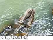 Купить «Затопленные бревна в горной реке», эксклюзивное фото № 27071031, снято 6 сентября 2017 г. (c) Александр Щепин / Фотобанк Лори