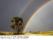 Купить «Double rainbow over Kgalagadi Transfrontier Park, Northern Cape, South Africa.», фото № 27074099, снято 12 июля 2020 г. (c) Nature Picture Library / Фотобанк Лори