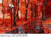 Купить «Autumn landscape. Red autumn trees and fallen autumn leaves on the wet footpath in park alley after rain», фото № 27075915, снято 6 октября 2017 г. (c) Зезелина Марина / Фотобанк Лори