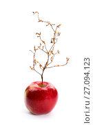 Купить «Спелое красное яблоко с растением похожим на дерево», фото № 27094123, снято 14 октября 2017 г. (c) V.Ivantsov / Фотобанк Лори