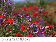 Купить «Красивый природный фон из полевых цветов», фото № 27103675, снято 29 мая 2017 г. (c) Яна Королёва / Фотобанк Лори