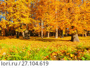Autumn landscape of sunny autumn park in nice weather. Golden autumn trees with fallen autumn leaves covering the ground, фото № 27104619, снято 9 октября 2016 г. (c) Зезелина Марина / Фотобанк Лори