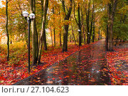 Autumn landscape. Yellowed autumn trees and fallen autumn leaves on the wet footpath in park alley after rain, фото № 27104623, снято 6 октября 2017 г. (c) Зезелина Марина / Фотобанк Лори