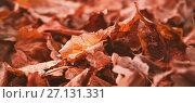 Купить «Close-up of autumn leaves», фото № 27131331, снято 22 июля 2019 г. (c) Wavebreak Media / Фотобанк Лори