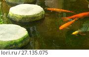Купить «Koi are form of Amur carp (Cyprinus rubrofuscus)», видеоролик № 27135075, снято 18 сентября 2017 г. (c) BestPhotoStudio / Фотобанк Лори