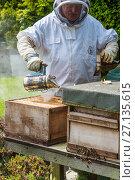Купить «Beekeeper using smoker to pacify bee colony prior to inspection, Norfolk, England, May. Norfolk, England, June 2017.», фото № 27135615, снято 18 августа 2018 г. (c) Nature Picture Library / Фотобанк Лори