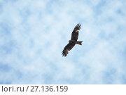 Eagle fly in the air on cloudy sky background. Стоковое фото, фотограф Сергей Дорошенко / Фотобанк Лори