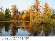 Купить «On the Bank of a tranquil pond with ducks in autumn», фото № 27141191, снято 17 октября 2017 г. (c) Алексей Маринченко / Фотобанк Лори