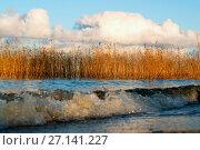 Купить «Waves , reeds and clouds at sunset in autumn», фото № 27141227, снято 21 октября 2017 г. (c) Алексей Маринченко / Фотобанк Лори
