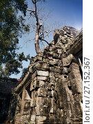 Купить «Jungle tree covering the stones of the temple ruins in Angkor Wat (Siem Reap, Cambodia),12th century», фото № 27152367, снято 1 февраля 2015 г. (c) Куликов Константин / Фотобанк Лори