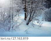 Купить «Winter nature, snowy trees in forest», фото № 27163819, снято 4 января 2017 г. (c) ElenArt / Фотобанк Лори