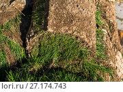 Купить «The rolled lawn folded in stacks outdoors», фото № 27174743, снято 2 ноября 2017 г. (c) Володина Ольга / Фотобанк Лори